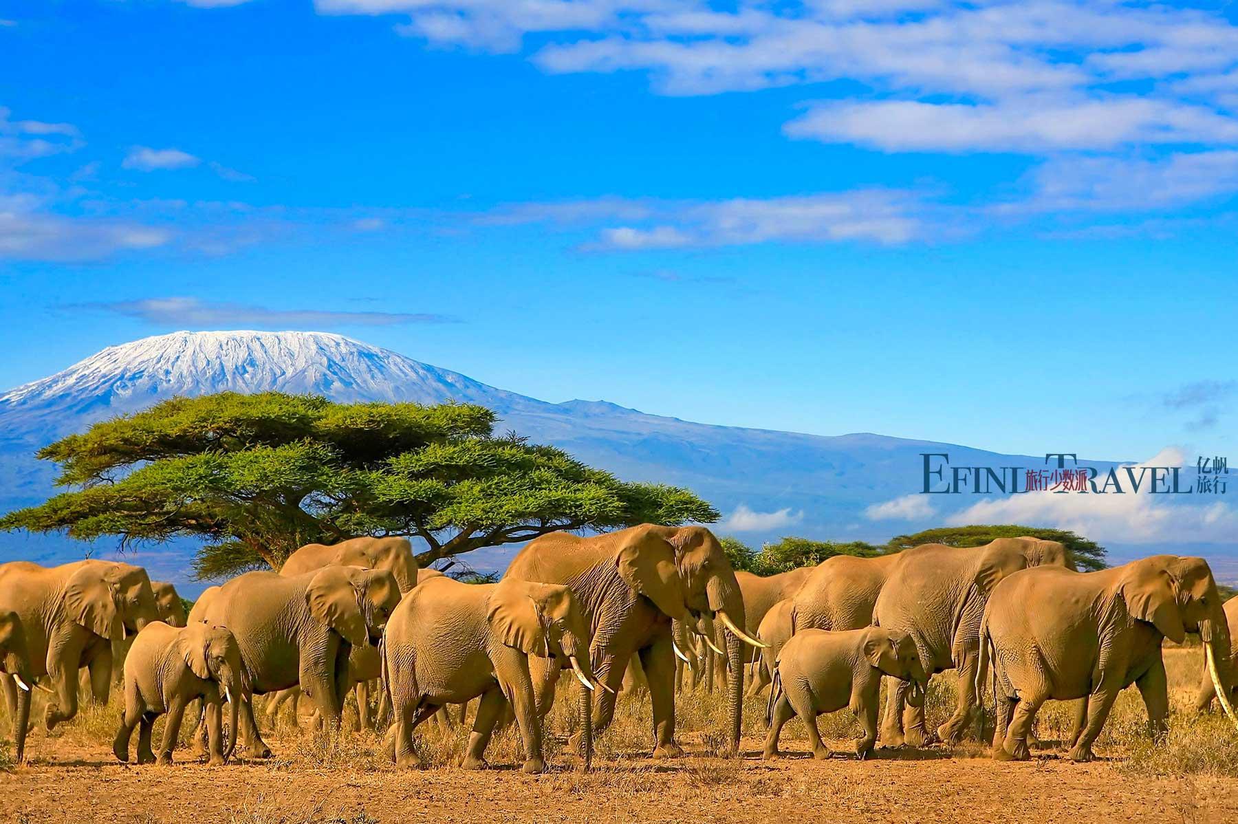 肯尼亚安博塞利公园远眺乞力马扎罗山