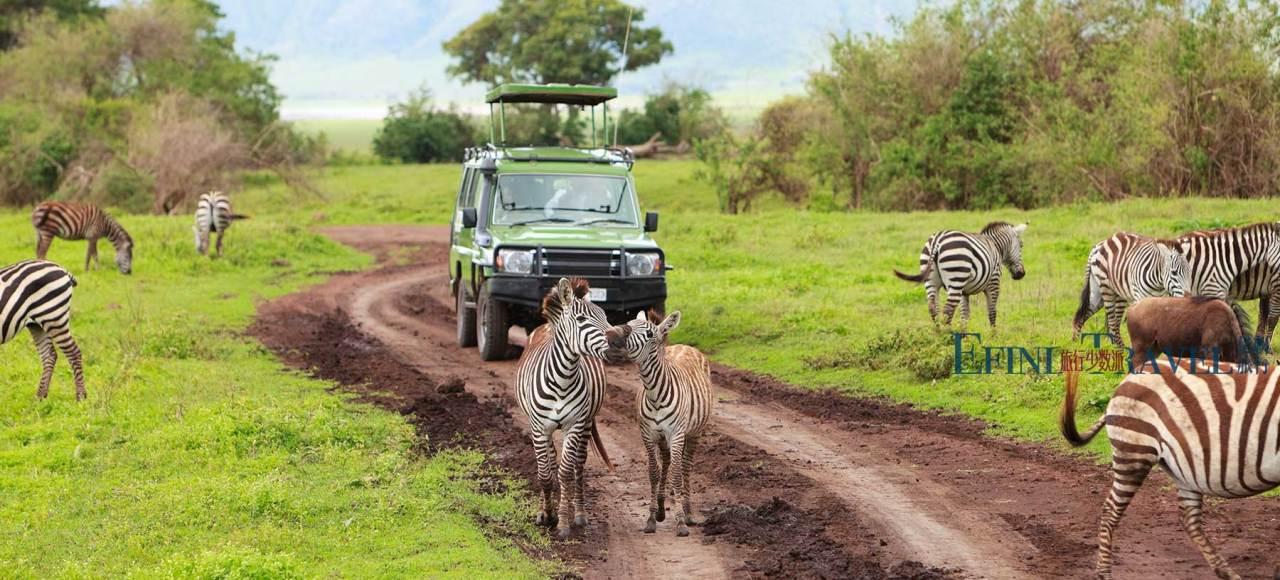 坦桑尼亚游猎