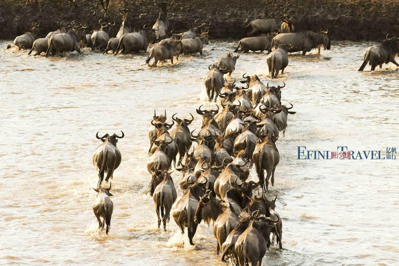 动物大迁徙天河之渡